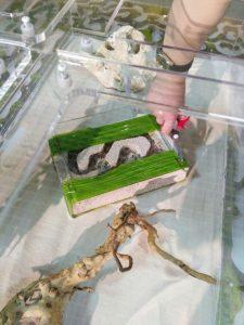 Муравьев выпускают в формикарий